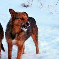 Экскурсия в Гадюкино зимой (44) :: Александр Резуненко