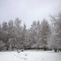 В ноябре , в ноябре все деревья в серебре. :: Мила Бовкун