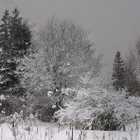 Зима :: Rabbit Photo