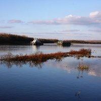 Река Белая(баш Ак-Идель-Белая река) :: Антонина
