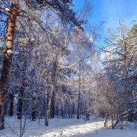 В зимнем лесу. :: Rafael