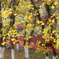 Осенний этюд :: Елена Семигина