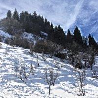 Лучше гор могут быть только горы! :: Diana Bunina