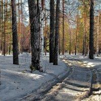 Зимы раскисла колея... :: Лесо-Вед (Баранов)