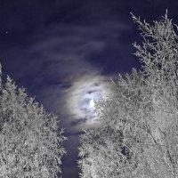 Лунная ночь :: Валерий Талашов