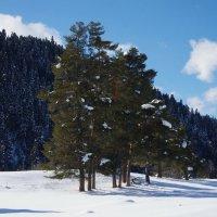Зима в горах :: Светлана Шатохина