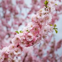 Весна - это состояние души! :: Nyusha