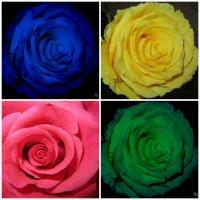 Розы :: Mariya laimite