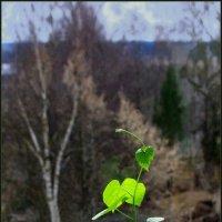 Цветок в окне :: Валерий Талашов