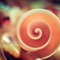 по спирали :: Photo Tasja