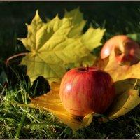 Яблочки в садочке :: Татьяна Ивановна