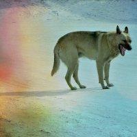 Бурятский пес :: Елена Фалилеева-Диомидова