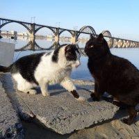 Коты и голубки :: Алекс Аро Аро