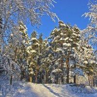 Лес зима :: Краснов  Ю Ф