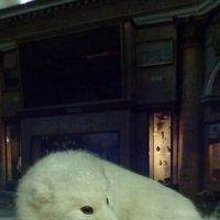 """Экспонат из музея """"Арктики и Антарктики"""". :: Светлана Калмыкова"""