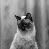 Мой кот :: Евгений Дольников