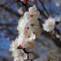Весна пришла. :: Виктор ЖИГУЛИН.