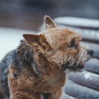 Собака :: Albina Lukyanchenko