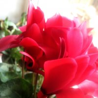 С наступающим праздником, дорогие мужчины!Счастья и удачи Вам! :: Елена Семигина