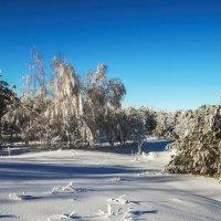 Зимний лес (2) :: Дмитрий .