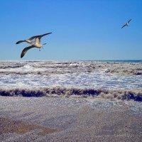 Шторм и чайки :: Виктор Шандыбин