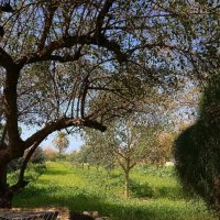 парк леуми Ашкелон :: ALEX KHAZAN