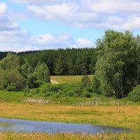 Лесной пейзаж :: Ольга Юртаева