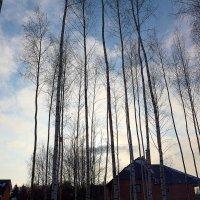 Зимний отдых на природе :: Ольга (Кошкотень) Медведева