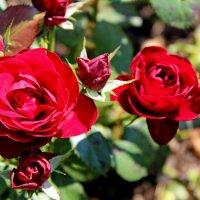 В цветнике цветы, невероятной красоты... :: Mari Kush