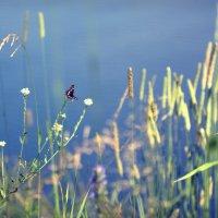 Бабочка :: Ольга Фролова