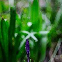 Весна!!! :: Сергей Шефер