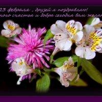 Всех... наших дорогих мужчин ...с праздником!!!!!!!!!!!!!!!!! :: Людмила Богданова (Скачко)