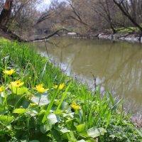 Весенний миус :: оксана косатенко