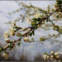 В цвету :: оксана косатенко