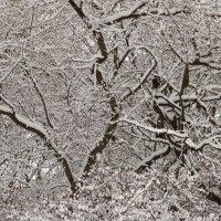 Ветки дерева в снегу :: Владимир Гилясев