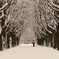 Зимняя липовая аллея с лыжником :: Владимир Гилясев