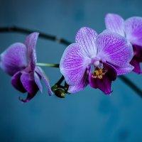 Орхидея :: Андрей Поляков