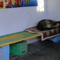 Выдали постельное бельё :: Валерий Чепкасов