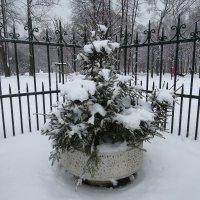 Выпал снег :: Вера Щукина