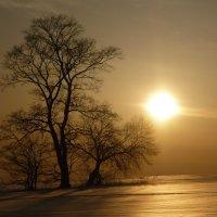Зимнее солнце :: Ольга