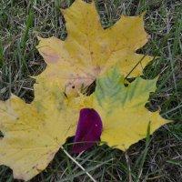 Листья жёлтые. :: zoja