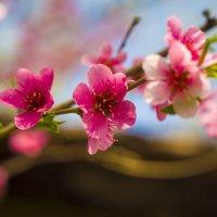 Весна :: Артем Коновалов