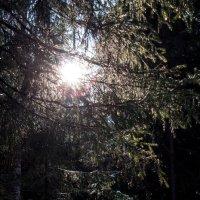 Милая моя, солнышко лесное :: Эльвира Сагдиева
