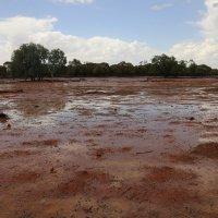 Пустыня после дождя.Австралия. :: Антонина