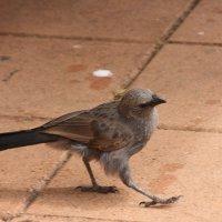 Неизвестная мне птица. :: Антонина