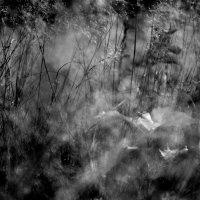 Травы. :: Валерия  Полещикова