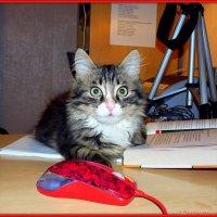 Читаю книжку, мышку сторожу... :: Андрей Заломленков