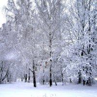 Зима. :: Борис Митрохин