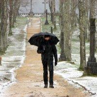 Прогулка под дождиком. :: Olga Grushko