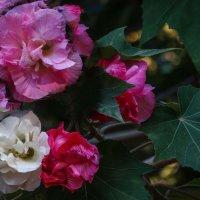 цветы с одного дерева :: Натали Акшинцева